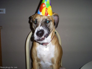 Party_dog_hates_party_hats