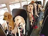 A_dog_train
