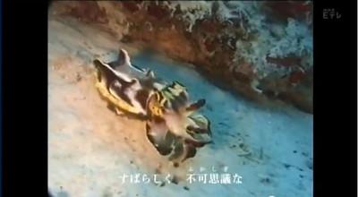 Subarasikikanasekai_anokai_3
