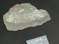 Cimg0298