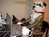 Stylishdogusingpcfunnyimage
