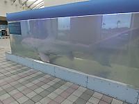 Cimg8700